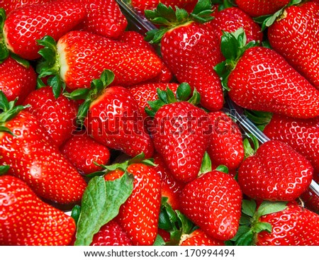 Strawberries - Full frame of Basket.