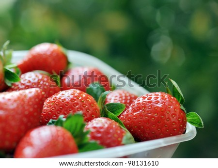 strawberries in a basket in the garden.