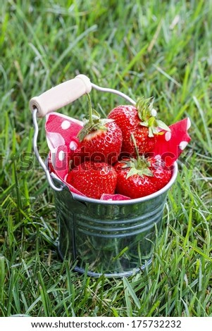Strawberries in silver bucket standing on green lush grass. Garden party idea