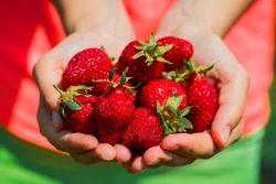 strawberries in the hands