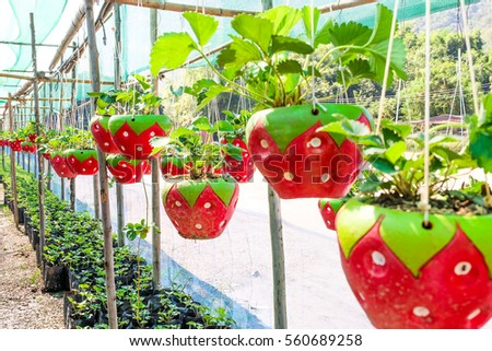 strawberry ceramic hanging in garden. #560689258