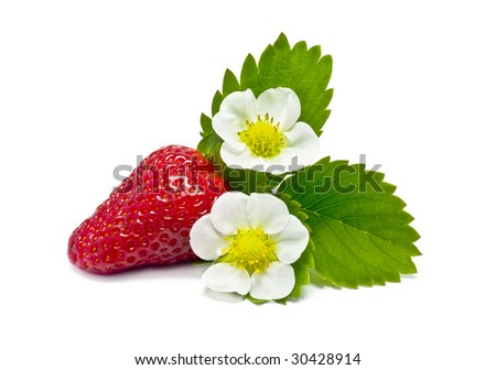 Strawberry. Fruits and flowers on a white background.