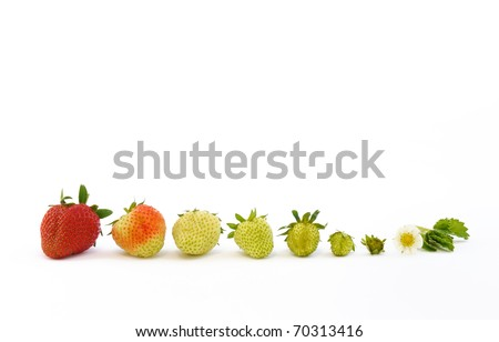 Strawberry growth isolated on white - concept