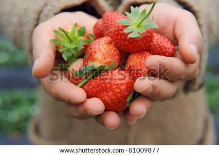 Stock Photo strawberry lie in female hands