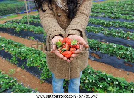 strawberry lie in female hands