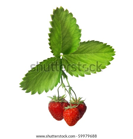 Strawberry with leaves isolated on white - stock photo