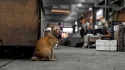 Stray and Feral Cats live in fresh markets in Bangkok.