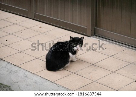 stray black and white cat sit and wait in front of a door at the outside
