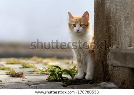 Stray cat. #178980533