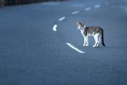 stray cat in the road. Road traffic accidents account for many cats lives every year. The majority of accidents occur at night, and often very close to the cat's home.