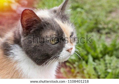 Stray cat in the street, blurred background. Close-up