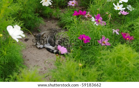 Stray cat is sleeping in between flowers in a public park (Selective Focus)