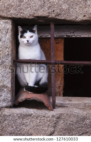 stray cat on an old window