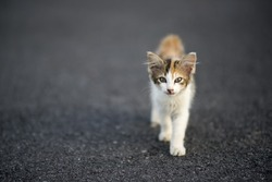 stray cat on the road. depth of field and selected focus