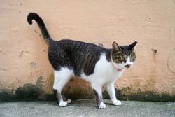 Stray cat on the street