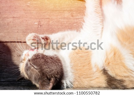 Stray cat on the street in summer, washes his face, licking his paws. Close-up. View from above