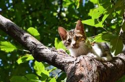 Stray cat on tree