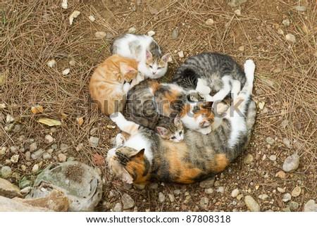 Stray cat outdoor in nature with many young kitten