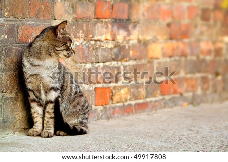 stray cat sitting by the wall and looking somewhere