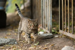 Stray cat walking,look like small tiger new cat photographer cat picture