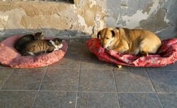 Stray cats and dog resting  together.