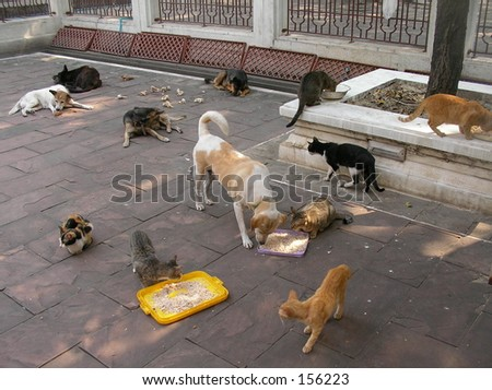 Stray cats and dogs
