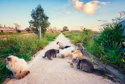 Stray cats eat dry food in the park