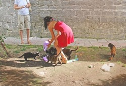 Stray cats feeding. Young woman in red dress gives food to wild cats on the street of Kotor, Montenegro. Group of stray cats eat. Cats of Kotor. Homeless animals care.
