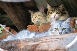 Stray cats in abandoned building. Three adorable street cats on brick grunge fence wall background in sunny spring or summer day