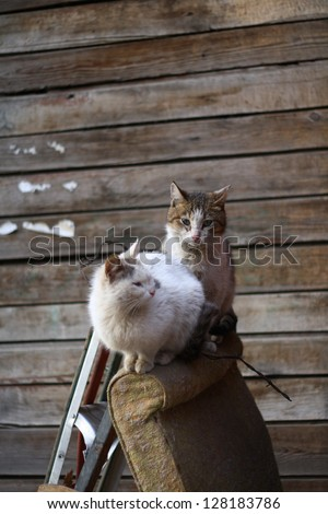 Stray cats sitting on discarded furniture