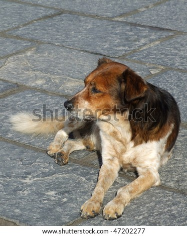 Stray Dog Greece