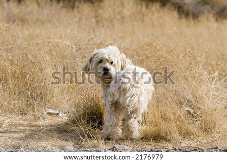 Stray dog in field.