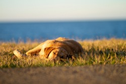 stray dog lying on the grass