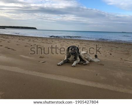 stray dog on the beach. hungry animals. stray dogs. animal protection day. Hayvanları Koruma günü.  Stok fotoğraf ©