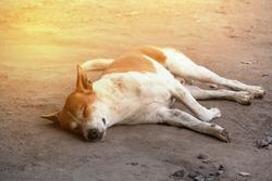 stray dog sleeping on the floor