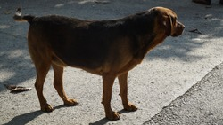 stray dog. Stray mutt dog standing on the street in a city looking sad in front of house