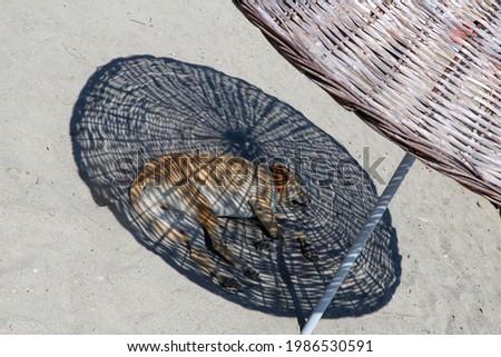 Stray dog under umbrella on the beach Сток-фото ©