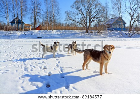 stray dogs on ice river