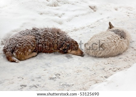 Photo of stray dogs sleeping in the snow during a blizzard