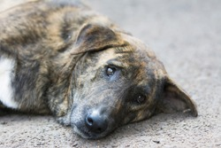 Stray dogs sleeping on the street