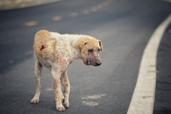 Stray dogs stand on the street.