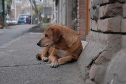 stray feral dog on a street.