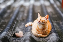 Stray ginger cat laying on roof with eyes closed. Enjoying the sun. Animals are friends. Adopt stray strees animals