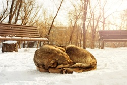 stray hungry dog sleeping in the snow