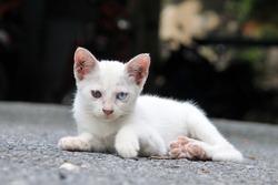Stray Kitten with Different Coloured Eyes (Heterochromia)