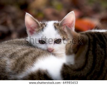Stray kittens