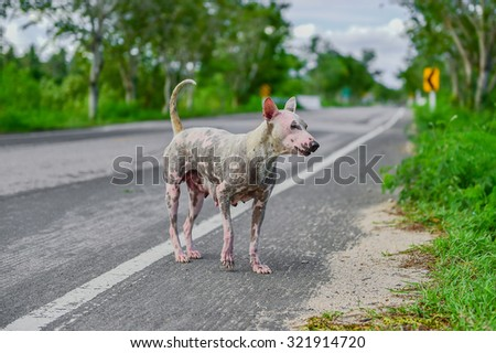 Stray mother dog , Stray female dog  looking in distance with hope , Hungry stray dog feeds her pups on a sidewalk