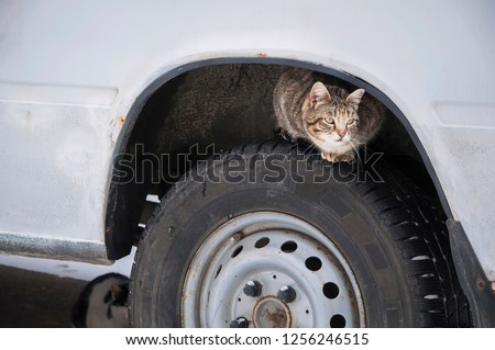 Stray street cat on car wheel. Homeless cat hiding looking for warmth in cold weather (life in danger concept)