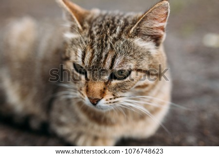 stray street cat walks in the spring Park. striped coloration of wool and colored eyes. concept: a lonely stray animals without an owner. emotional portrait of a pet in nature #1076748623