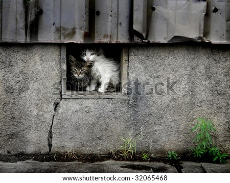 Stray wet kittens in abandoned building